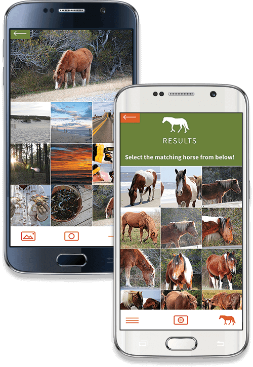Assateague Horse ID Android Screenshot