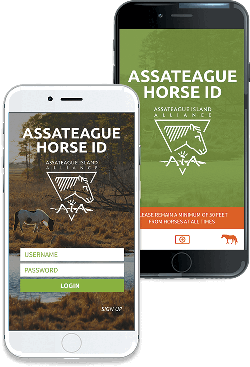 Assateague Horse ID IOS Screenshot