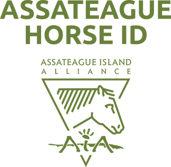 Assateague Horse ID